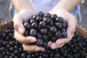 acai_berries_hand
